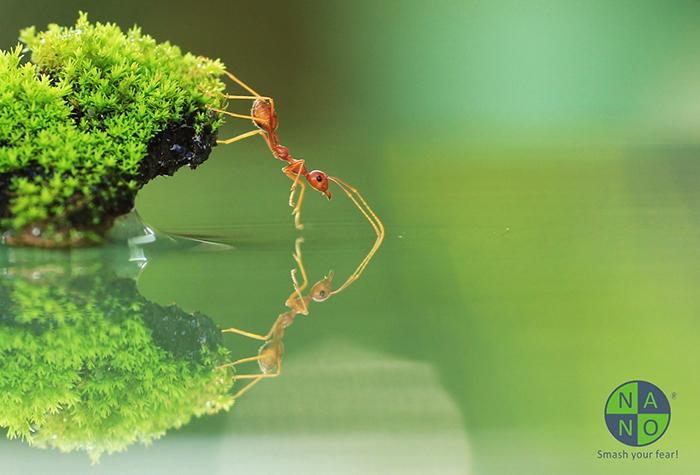 Mối quan hệ giữa kiến và hệ sinh thái 1