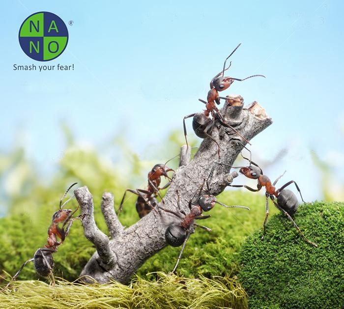 Mối quan hệ giữa kiến và hệ sinh thái 2