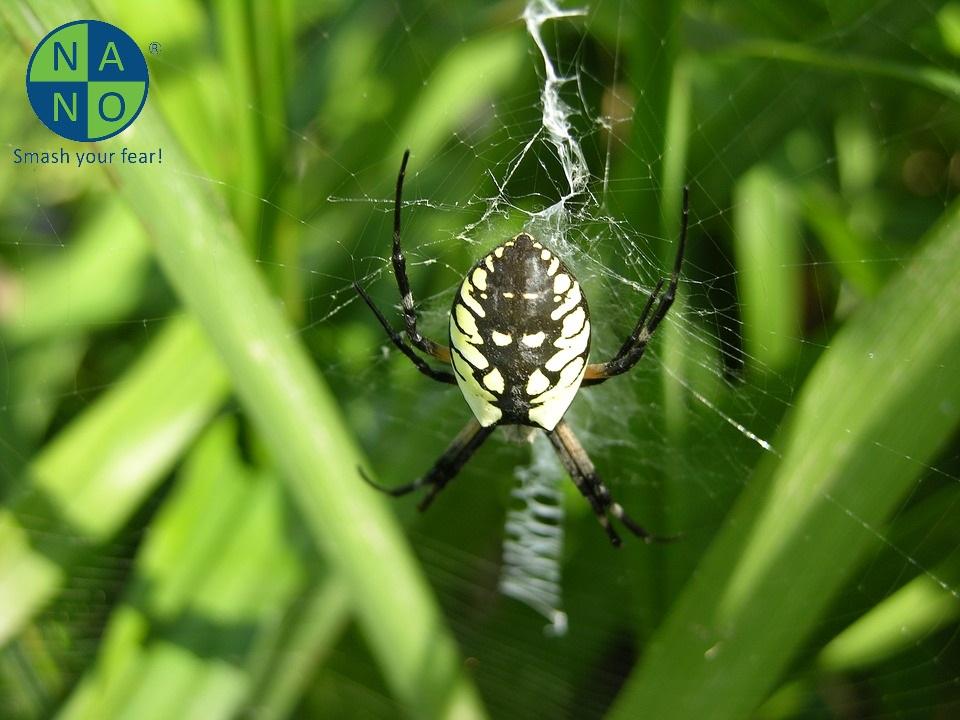 garden-spider-2043962_960_720